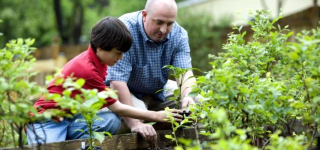 father-and-son-gardening